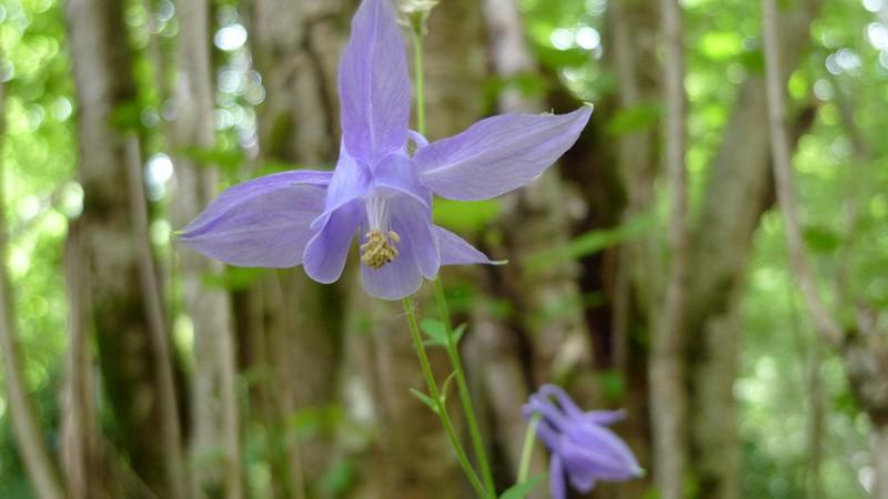 flores ordesa y monte perdido (20)