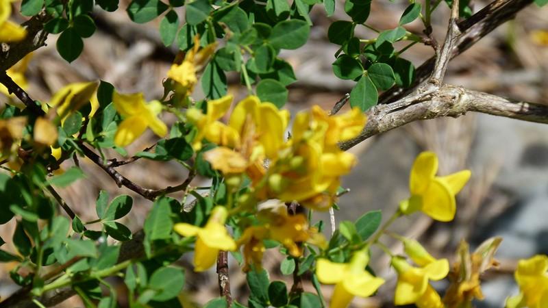 flores ordesa y monte perdido (4)