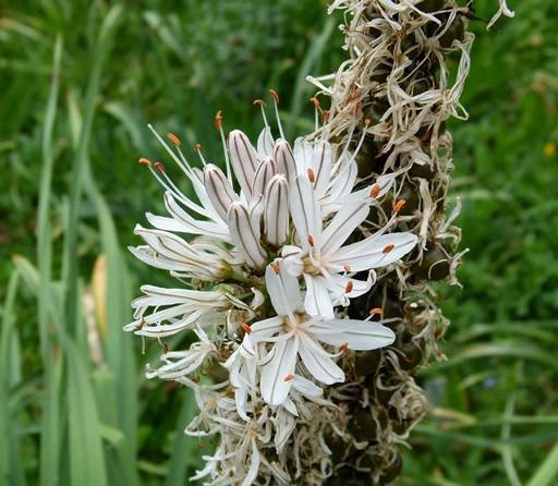 flores ordesa y monte perdido (7)