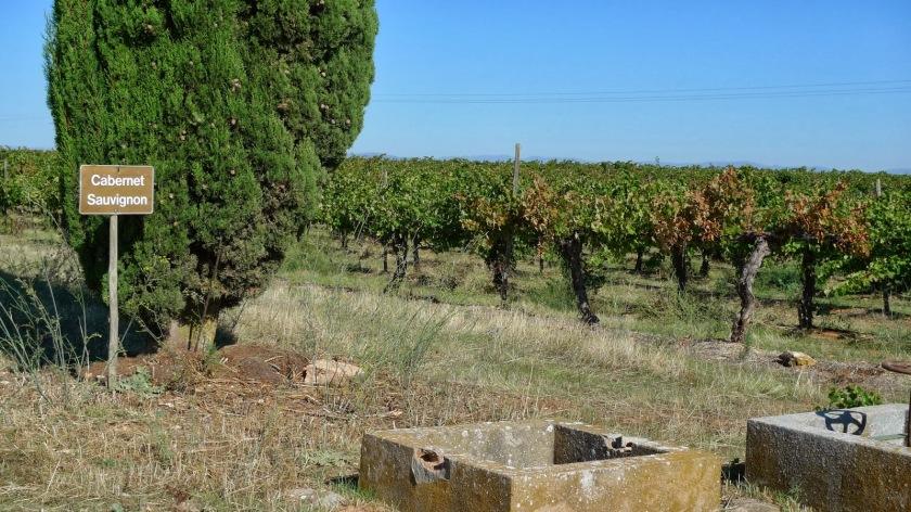 Tipos de uvas cultivadas