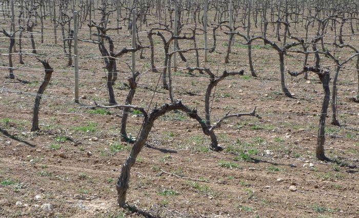cepas Vinos Cuenca