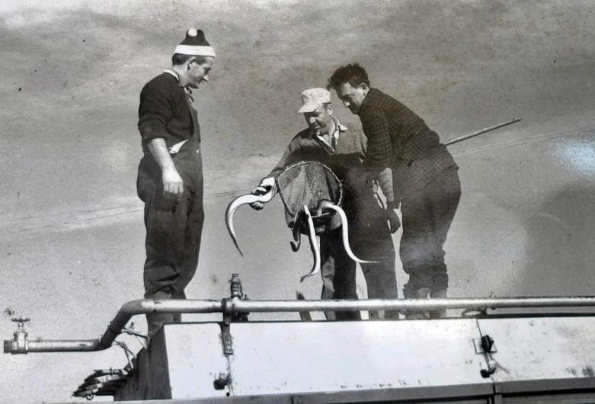 Pesca tradicional de anguilas