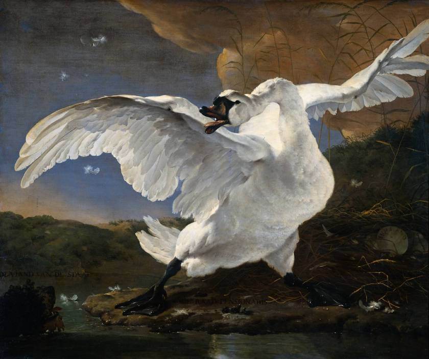 El cisne amenazado