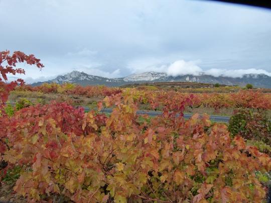 Rutas por viñedos en Argentina o Chile esperan por ti Rioja Alavesa - Laguardia - España