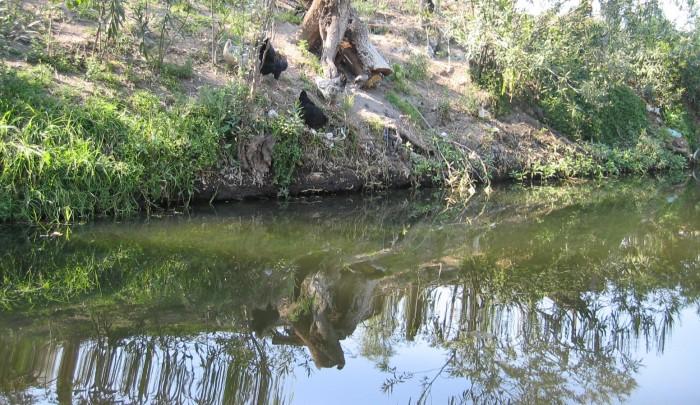 xochimilco mexico (4)