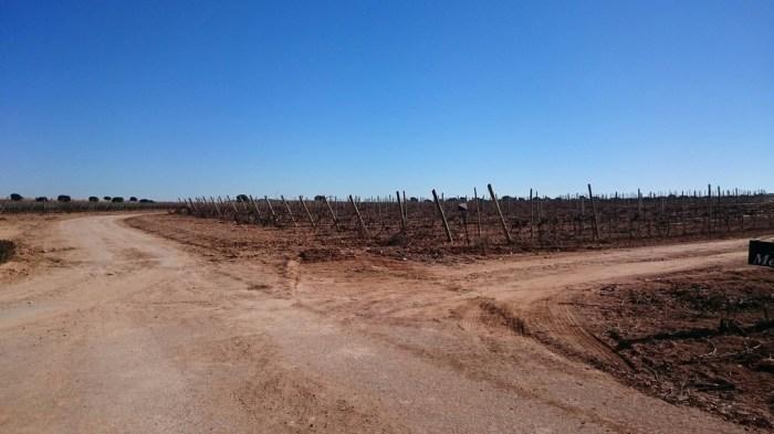 Bodega Los Aljibes, Horna Albacete (1)