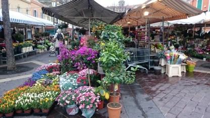 flores niza (1)