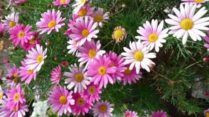 flores niza (2)