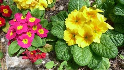 flores niza (3)