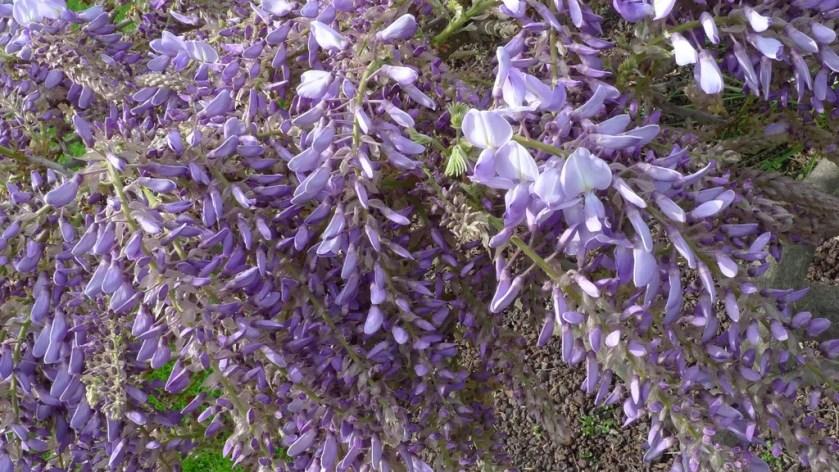 flores niza (4)
