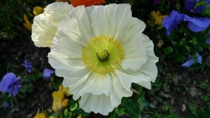 flores niza (6)