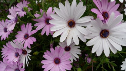 flores niza (7)