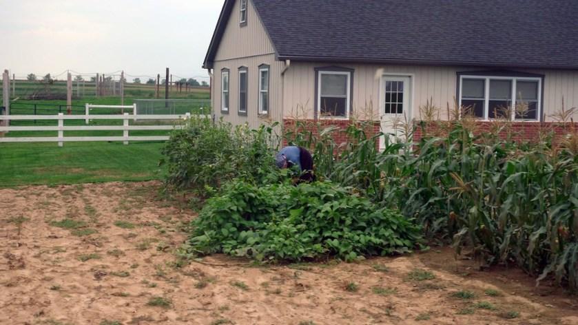 Maíz, tabaco, verduras son algunas de las siembras que se ven por el condado
