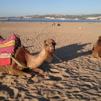 Consejos para viajar al desierto