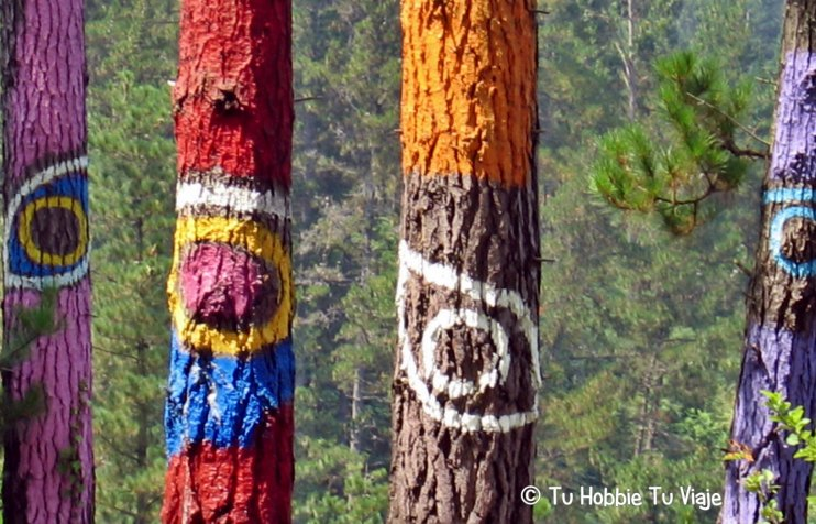 bosque de oma_THTV 1