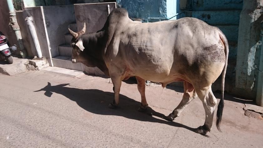 Jodhpur ciudad azul (7)