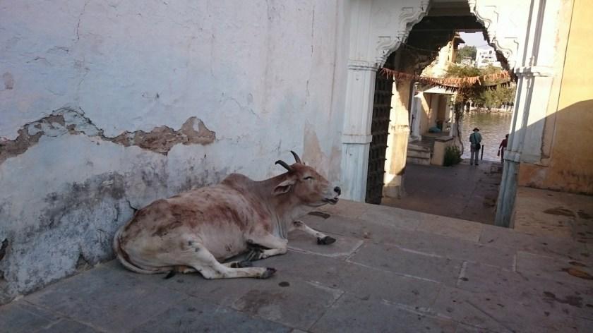 Udaipur ciudad (27)