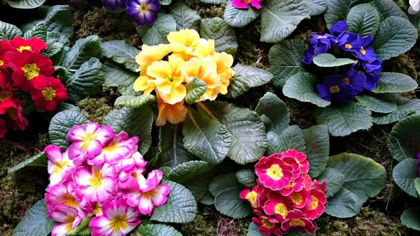 flores villandry