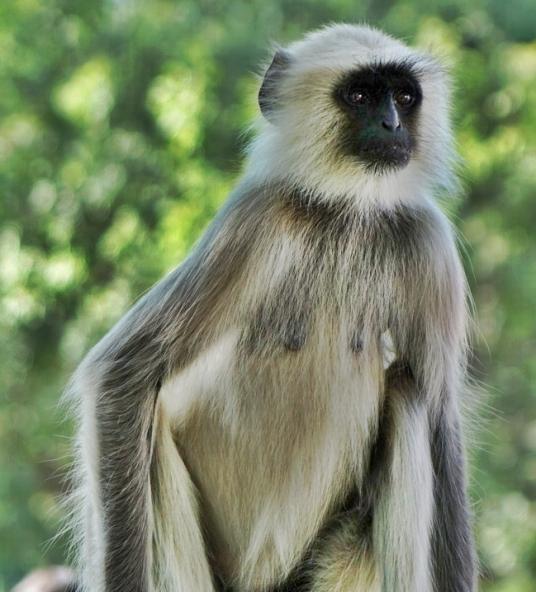 mono en ranakpur