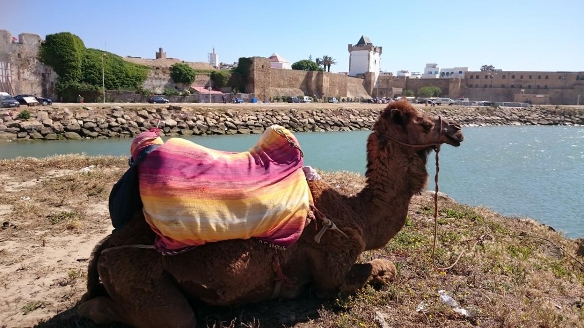 Asilah Marruecos (1)
