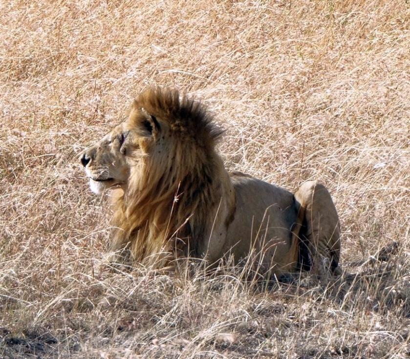 Masai Mara (293)