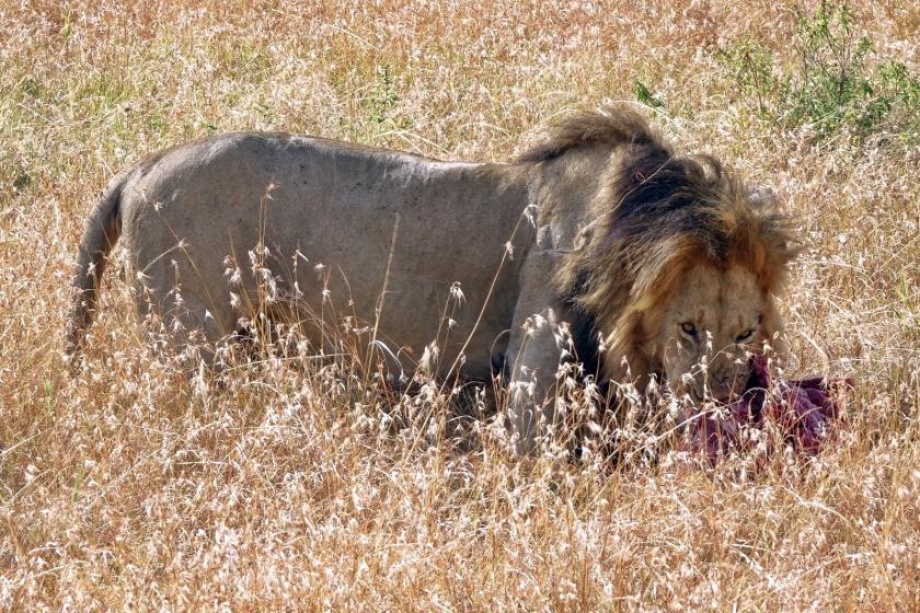 Masai Mara (304)