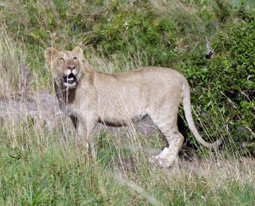 Masai Mara (381)