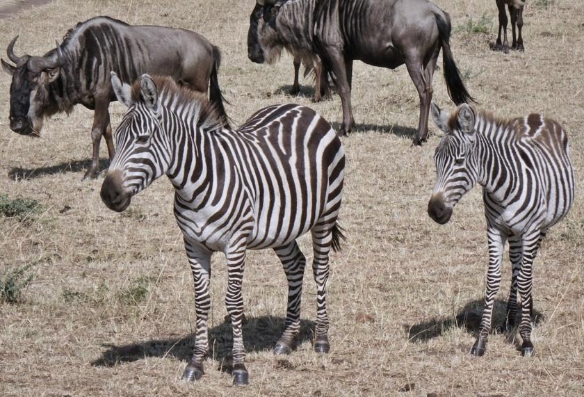 Masai Mara (402)