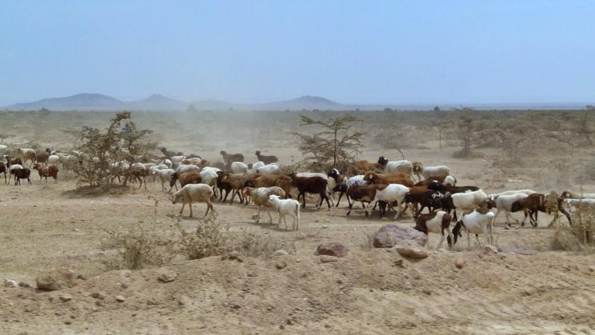 Masai Mara (46)