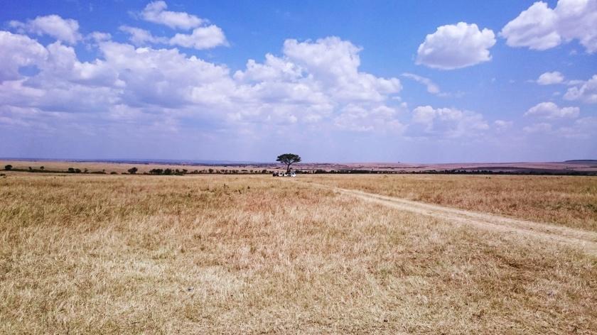 Masai Mara (521)