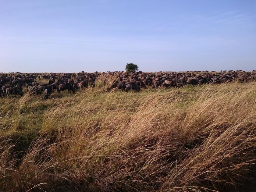 Masai Mara (610)