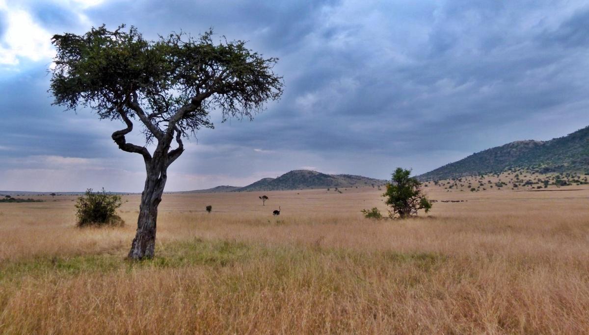 Consejos para ir a un safari fotográfico