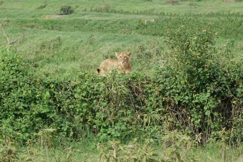 Nakuru Parque (13)