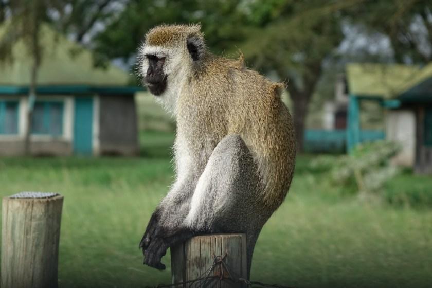 Nakuru Parque (23)