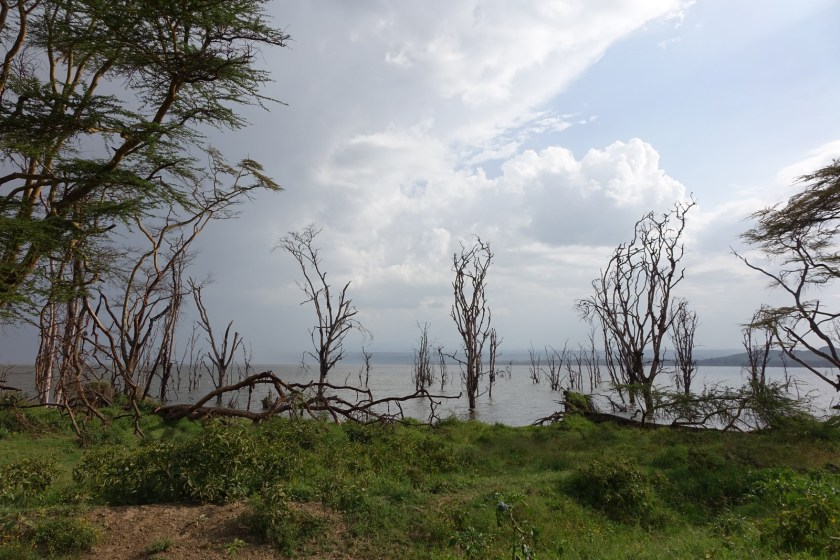 Nakuru Parque (24)