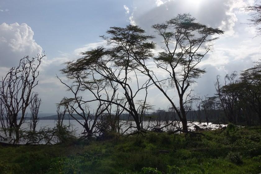 Nakuru Parque (25)