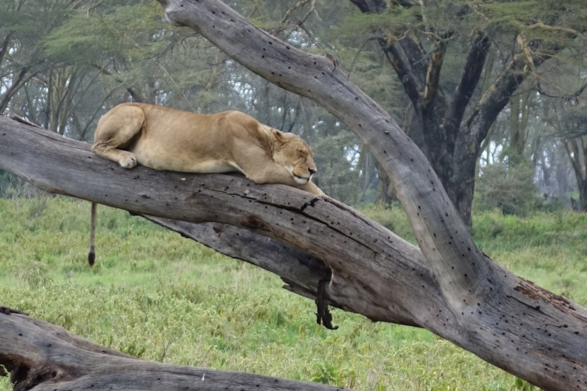 Nakuru Parque (79)