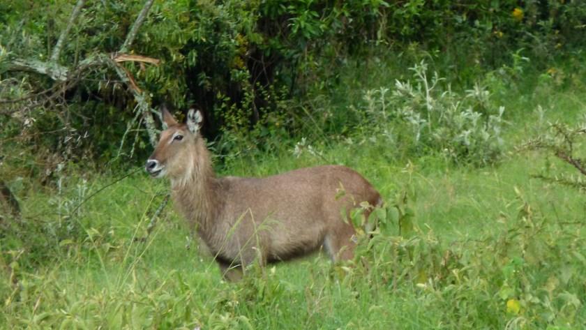 Nakuru parque II (18)