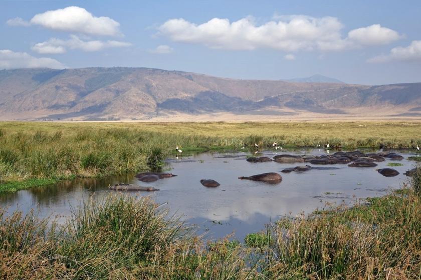 Ngorongoro Crater (30)