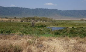 Ngorongoro Crater (50)