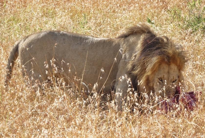 Parque Masai Mara (130)-1