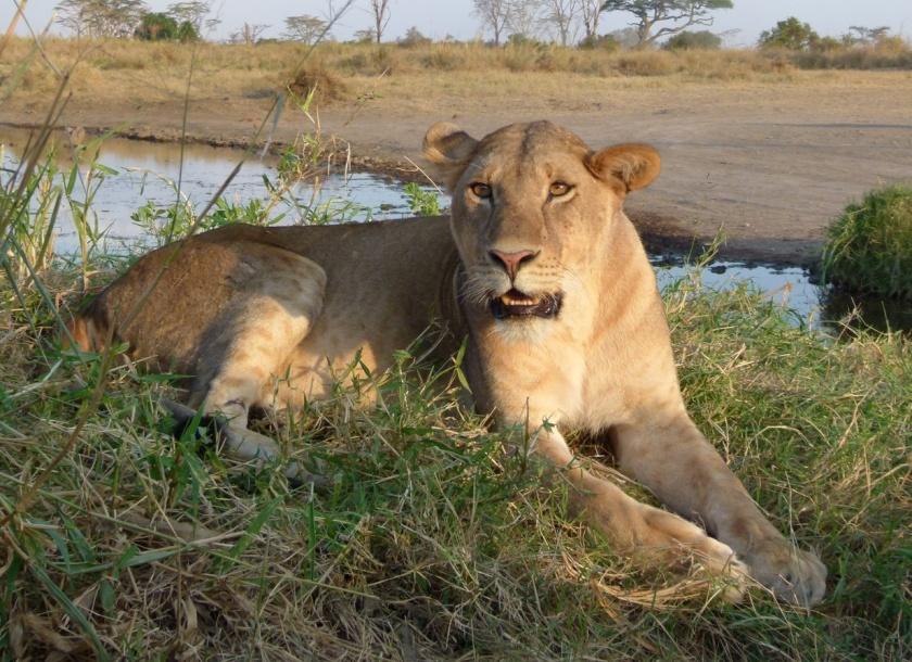 Serengueti (107)-1