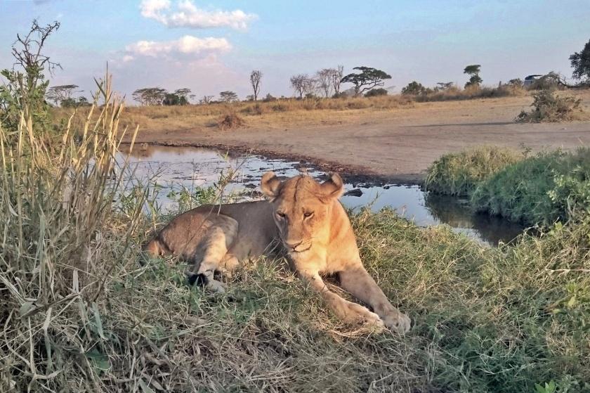 Serengueti (1)