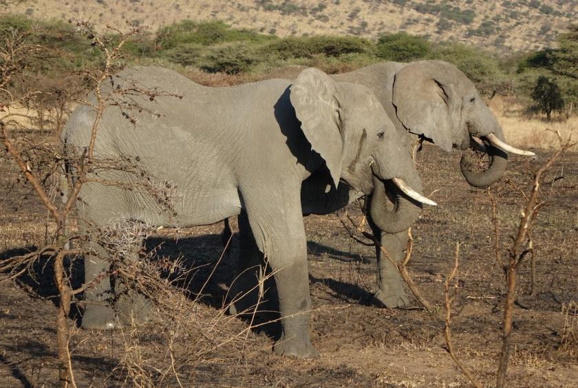 Serengueti (137)-1