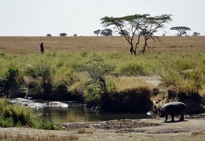 Serengueti (211)-1