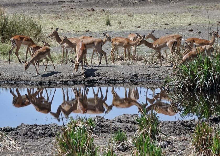 Serengueti (252)-1