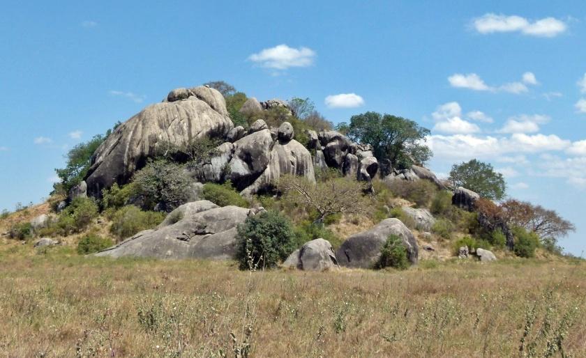 Serengueti (308)-1