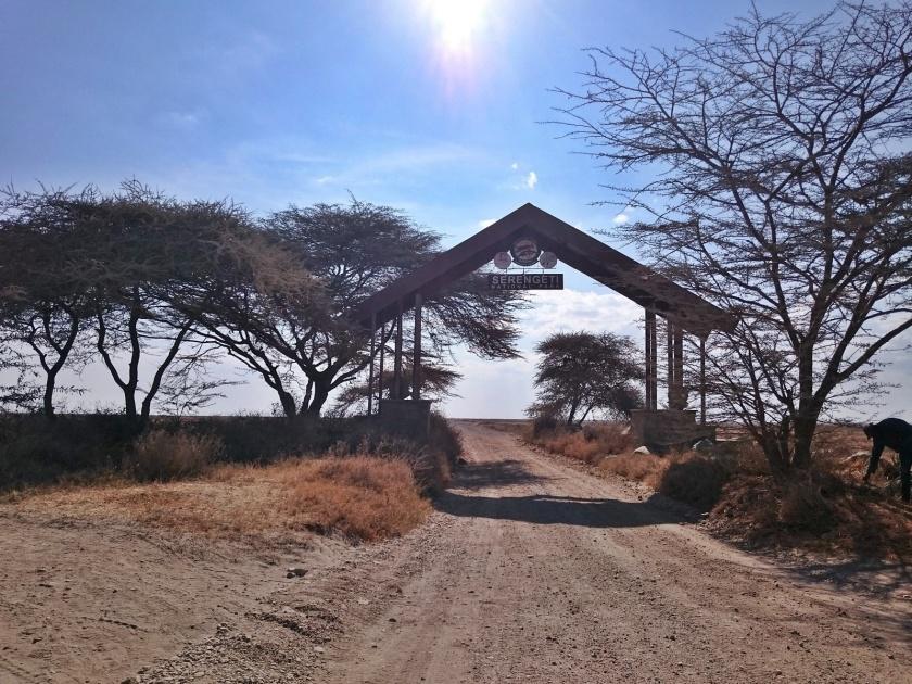 Serengueti (345)-1