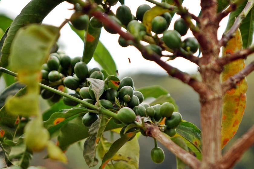 casa-karen-blixen-nairobi-4