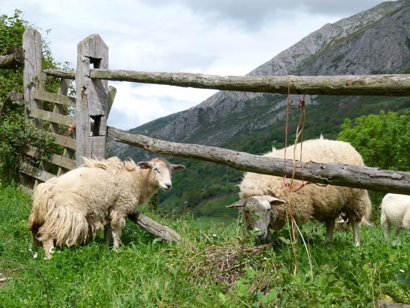 bezanes-asturias-1